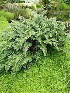 R sultat de recherche d 39 images pour plante avec plumeau for Plante plumeau rouge