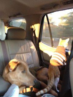 Road trip....look at Kurtis???