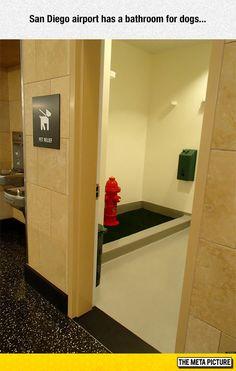 Bathroom For Dogs