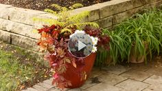 Container gardening isn't just for annuals! Get more bang for your buck by planting perennials in containers and enjoy them for years to come. We show you the best perennials for containers along with how to plant perennials in containers./