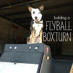 Building a flyball boxturn