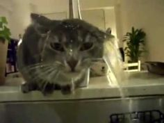 ▶ Kitteh dwinks fwom phauwset - pretteh epic acksualy....Cat drinking from faucet :) - YouTube