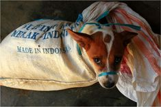 Every year, millions of dogs are brutally transported throughout Indonesia to supply the demand for