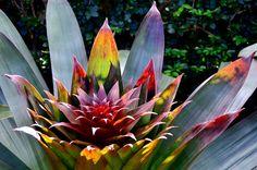 Backlit Bromeliad by Eddie C3, via Flickr  How beautiful do you get?