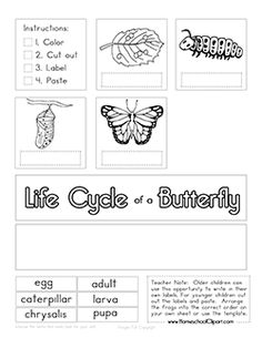 Free Life Cycle of a Butterfly Cut & Paste Worksheet