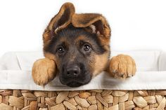 Seu Pet tem Dor? Doenças ortopédicas nos Pet! | Blog do CTI Veterinário