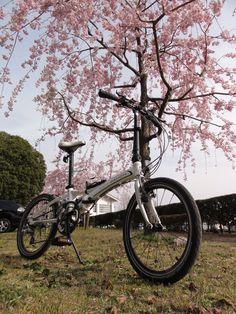 ©サフィーさま / Visc. P18 / 普段、何気なく車で通りすぎている桜道。DAHONでのんびり走れば、ちょっとだけ行楽気分になれますね。