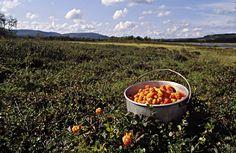 Hjortron på fjällmyr Berries, Good Things, Outdoor Decor, Sport, Food, Projects, Deporte, Excercise, Eten