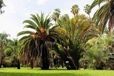 Rom Botanischer Garten herzanhirn