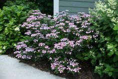 From 'Limelight' to 'L.A. Dreamin' to 'Peppermint Swirl', discover colorful hydrangea varieties to add to your garden.