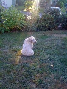 Clover in a Sunbeam!