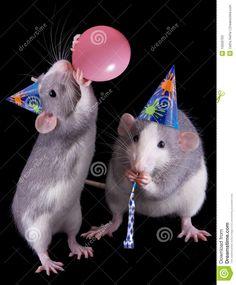 De Ratten van de partij stock afbeelding. Afbeelding bestaande uit knaagdier - 10559703