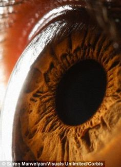 Scientists 'print' new eye cells that could be used to treat blindness. British researchers used inkjet printers to print two types of central nervous system cells from the retina of adult rats. The study, by the University of Cambridge, found that printed eye cells were able to grow normally and can be kept healthy.