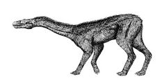 Snake headed dog- North American cryptid: a shaggy haired creature that had a long snake like head and neck with red eyes. It also had long hind legs and short forelimbs. It lacked a tail. It was witnessed by two drivers on a dark road in California. Explanation could be it was just a deer