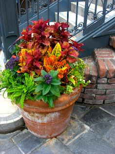 colorful flowers in pot!