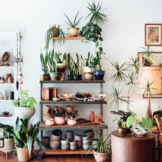One of the (many) things we love about stocking a plant pop-up inside a vintage store is how it helps us to visualize what the plants and pottery will look like in our homes. Thankfully @mavencollectpdx brings in such lovely pieces that it makes this very easy ! Shop these shelves at the link ☝️