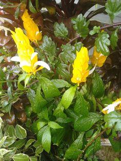Petra, Flowers, Plants, Garden, Garten, Planters, Royal Icing Flowers, Gardening, Outdoor