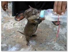 Funny Baby Animals | Funny animal. Baby, drink » Funny Photos Pictures