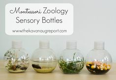 Zoology Sensory Bottles for Montessori Babies -- easy to create sensory bottles plus extension ideas for toddlers and preschoolers!