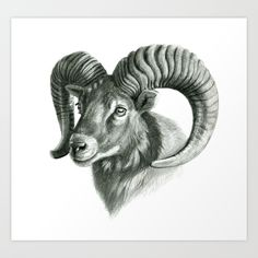 Just one of millions of high quality products avai. Realistic Animal Drawings, Pencil Drawings Of Animals, Animal Sketches, Widder Tattoo, Ram Tattoo, Big Horn Sheep, Capricorn Tattoo, Snake Art, Graphite Drawings