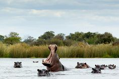 The Okavango Delta - http://www.silversurfers.com/travel/destination-features/okavango-delta/