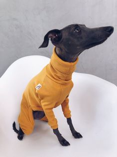 italian greyhound and whippet clothes / iggy jumpsuit / Dog Sweater / dog clothes / ropa para galgo italiano y whippet/ MUSTARD JUMPSUIT Italian Greyhound, Whippet, Jumpsuits, Dinosaur Stuffed Animal, Etsy, Dogs, Animals, Clothes, Hand Made