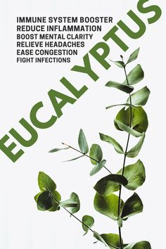 Eucalyptus is one of the most versatile essential oils and it is widely used in the pharmaceutical and perfume industry. It is known for its ability to alleviate the symptoms of allergies, colds, and…More Healing Herbs, Holistic Healing, Medicinal Plants, Natural Health Remedies, Natural Cures, Natural Healing, Natural Medicine, Herbal Medicine, Immune System Boosters Natural