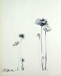 Image result for wildflower drawing