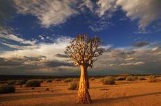 """Résultat de recherche d'images pour """"namibie national park"""""""