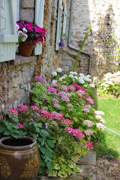 Joli parterre de fleurs
