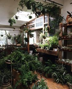 The most difficult part about moving to another country is restraining myself from buying things I can't take with me. Like plants. 😭 Repost from DM for credit or removal 😉😉😉 . Room With Plants, House Plants Decor, Plant Decor, Plant Aesthetic, Aesthetic Room Decor, Garden Shop, Home And Garden, Decoration Plante, Green Rooms