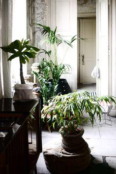 myriam-balay-devidal-plantes