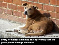 Every homeless animal is an opportunity that life gives you to change the world.