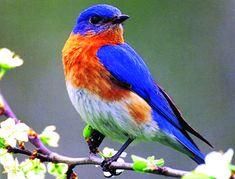 Ideas Bird Cage Wallpaper Blue For 2019 Rustic Bird Baths, Bird Artwork, Backyard Birds, Bird Illustration, Watercolor Bird, Bird Design, Colorful Birds, Bird Prints, Bird Cage