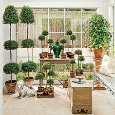 Create an Ideal Environment | Condition myrtle topiaries with bright light and a moderate temperature. Mist plants often. Heating systems can dry out air and plants. | SouthernLiving.com