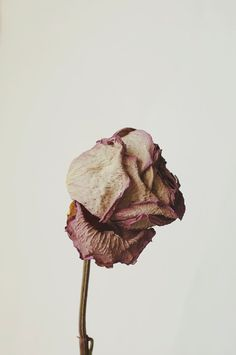 Floral Still Life Macro Photography Dried Rose by bellesandghosts, $13.00