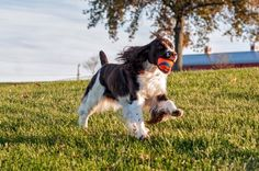 5 Breeds Who Are Surprisingly Good at Fetch | Dogster