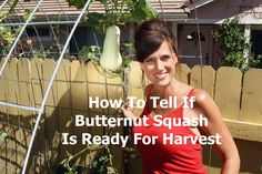 Butternut squash can be tricky to harvest. Here's three things to look for that will tell you if your butternut squash is ready to pick.