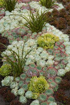 cool planting idea for succulents