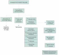 On the PCOS  Cardiometabolic Continuum  A Case Report Medscape Education