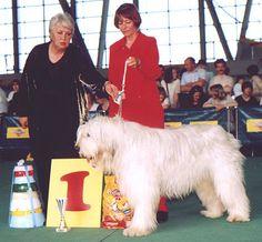 Выставка собак *Белые ночи* - Bсе для людей!