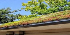 Green roof Living roof