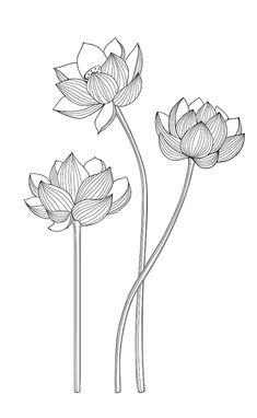 Lotus Flower Art, Lotus Art, Lotus Flower Tattoo Design, Flower Line Drawings, Flower Sketches, Doodle Art Drawing, Art Drawings, Black Pen Drawing, Mandala Design