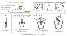 10 motivi per usare Sprout (la matita che cresce) - BabyGreen