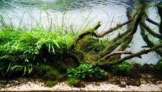 Layout par Kirua. #aquascaping #aquarium