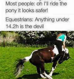 I used to take horse back riding lessons and those lil ponies we're so cute yet so vicious. Don't let their looks deceive you.