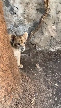 Zoo Animals – Cute Animals – Funny Animals – An Amazing Zoo Trip Cute Little Animals, Cute Funny Animals, Cute Cats, Funny Cats, Cute Animal Videos, Cute Animal Pictures, Funny Pictures, Nature Animals, Animals And Pets