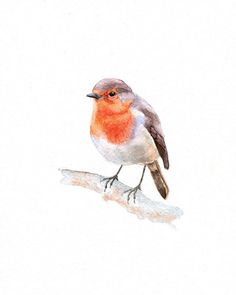 Robin - Print Watercolor -Bird