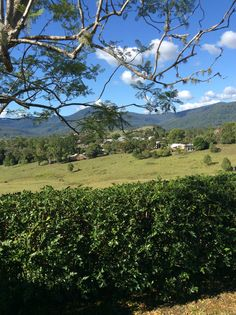 Looking over Nimbin. NSW. Australia.
