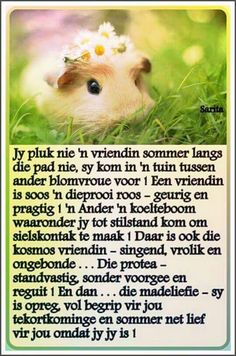 Jy pluk nie n vriendin sommer langs die pad nie, . Strong Quotes, Wise Quotes, Famous Quotes, Daily Quotes, Wise Sayings, Qoutes, Good Night Wishes, Good Morning Good Night, Baie Dankie